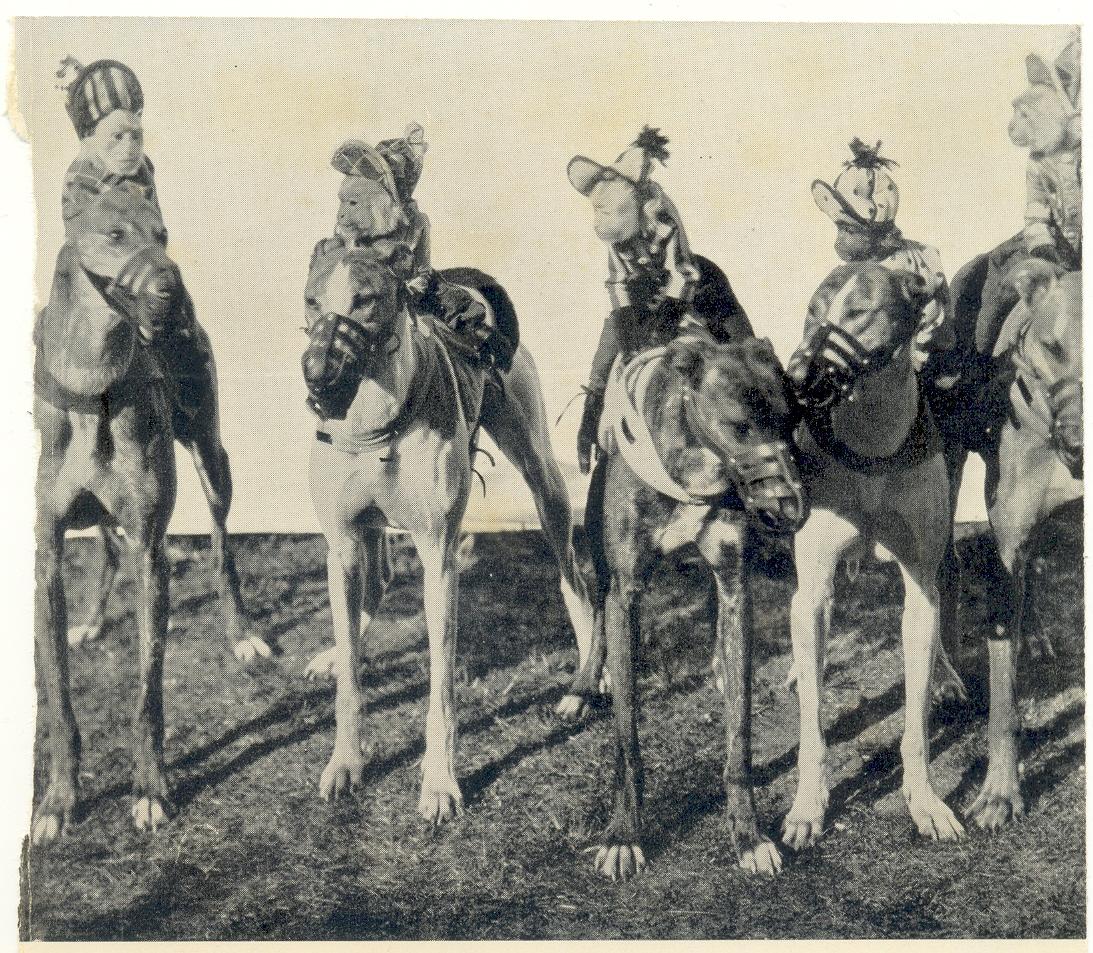 Monkey jockeys Shanghai Canidrome - circa 1939